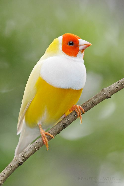 This is a bird.